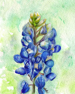 bluebonnet-small